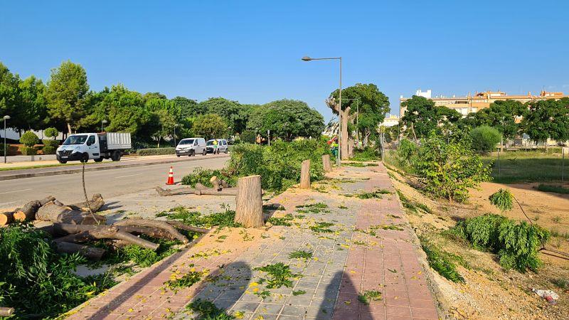 Comencen els treballs a la Balaguera per arreglar les voreres alçades per la força dels arbres