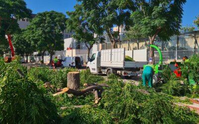 L'Ajuntament repara les voreres de la Balaguera i crea un nou bosc urbà d'arrels no invasives